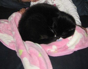 Kitty in an Itty Bitty lap