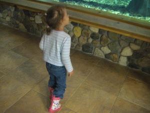 Admiring the fish at Cabellas